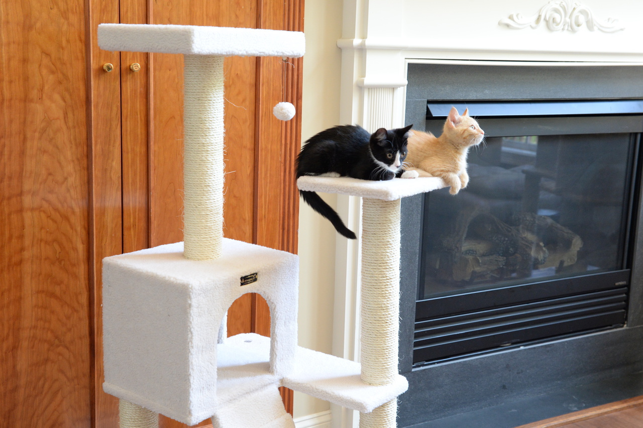 Cat Tree Store Classic Cat Tree B5301/Cat Tower/Cat Condo