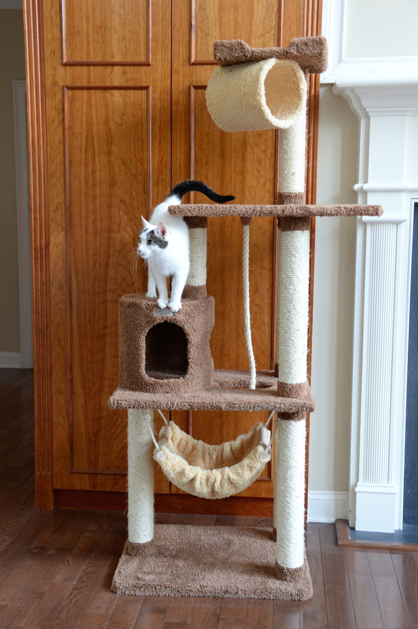 Cat Tree Store Premium Cat Tree X7001/Cat Tower/Cat Condo